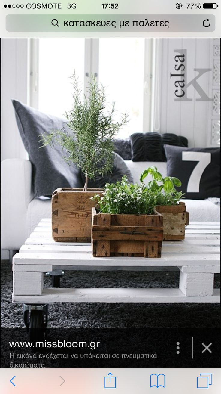 Plants in vintage boxes