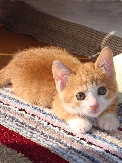orange kitty ♥