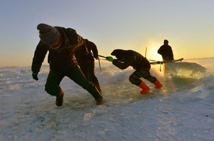 Grote ijsblokken worden met veel moeite uit de rivier gehakt en getrokken om het festival mogelijk te maken.