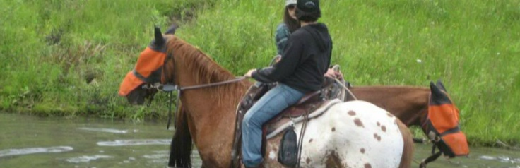 Real Horseriding in NYS