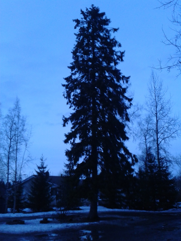 Some blurry tree in Oulunsalo, Oulu.