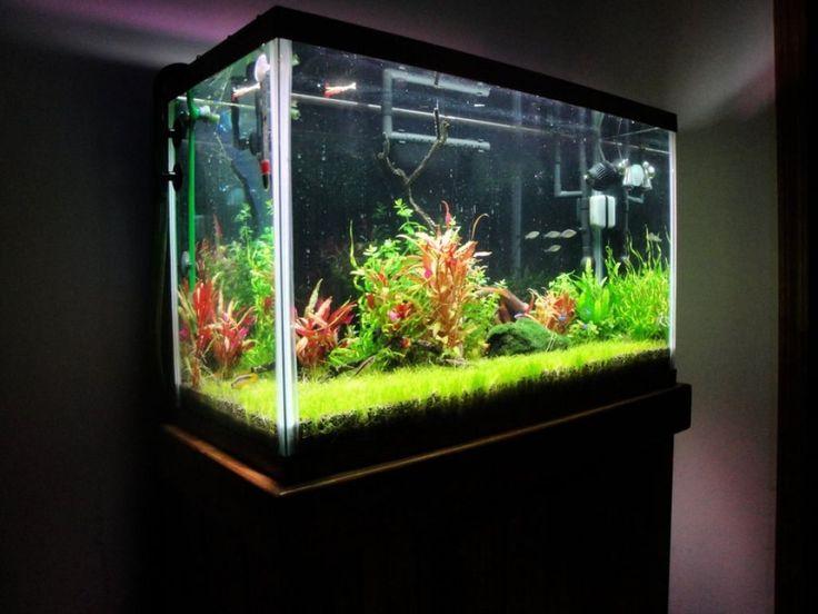 Decorative Artificial Aquarium Plants Check more at http://www.wearefound.com/decorative-artificial-aquarium-plants/