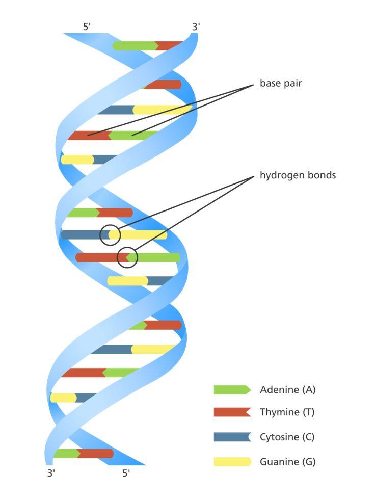 22 best Biochemistry images on Pinterest