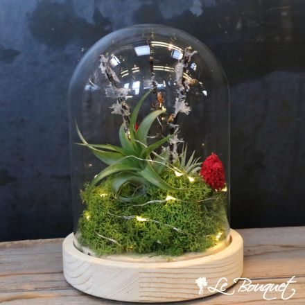 luminance airplant globe by montreal flower delivery specialists Le Bouquet St. Laurent