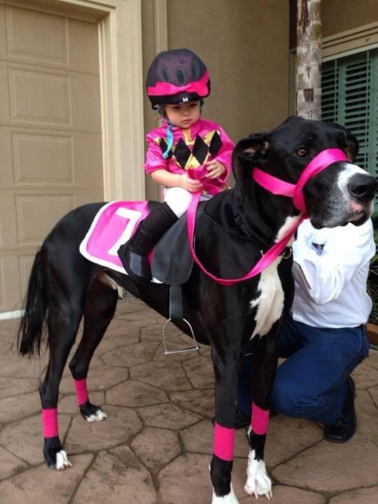 Cool costume. Great Dane dressed as a horse.