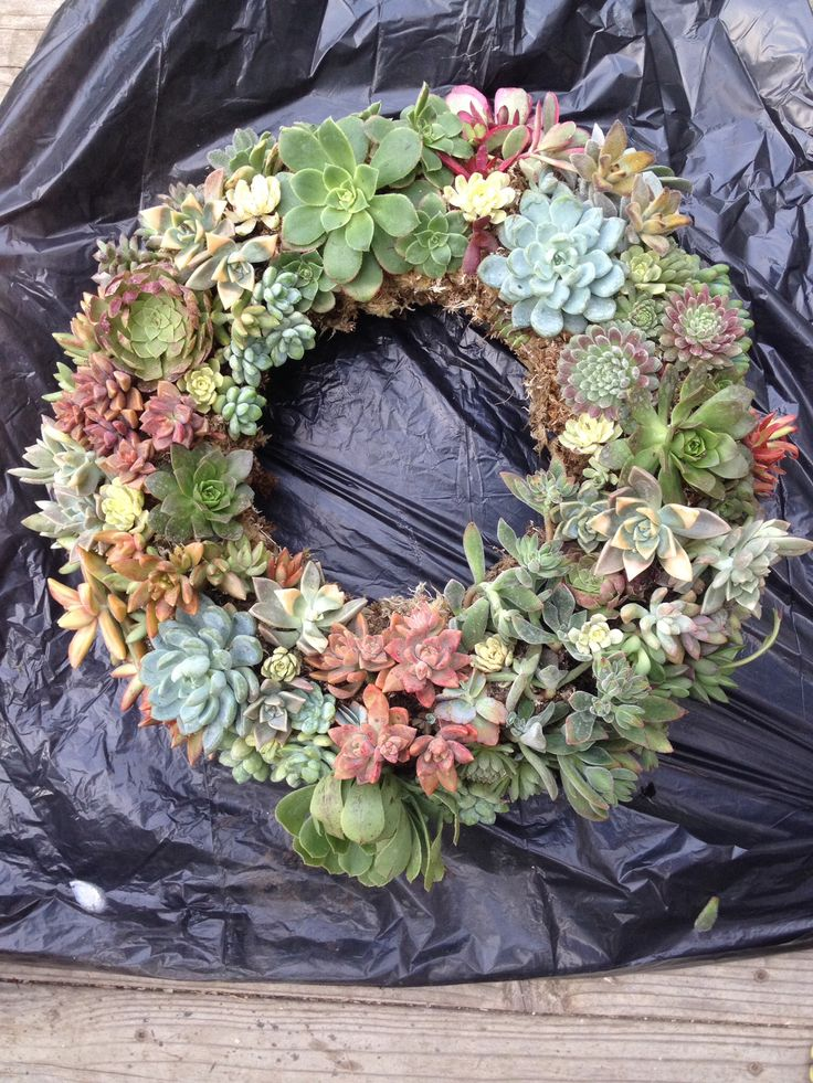 My first succulent wreath