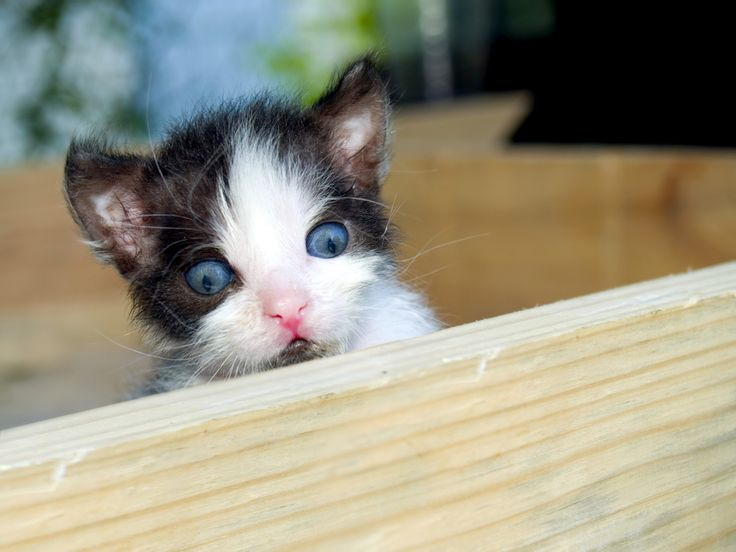 There are more African American Adults under correctional control today, in prisoner jail, on probation or parole than were enslaved in 1850. - 15 Facts About Racism - Using Cute Kitten Pictures -   BlackPrint Project