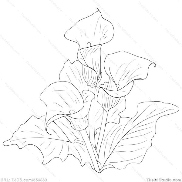 Lily Tattoo Line Drawing : Calla lily bouquet drawing dra painting and