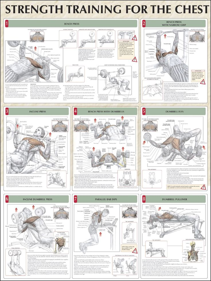 Chest Weight Lifting Exercises Diagram Diy Enthusiasts Wiring