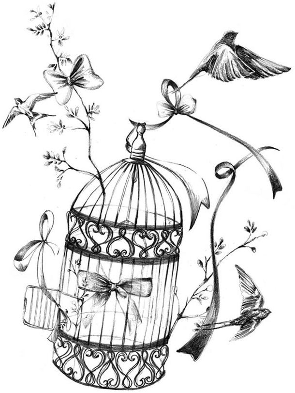 Antique bird cage drawing - photo#26