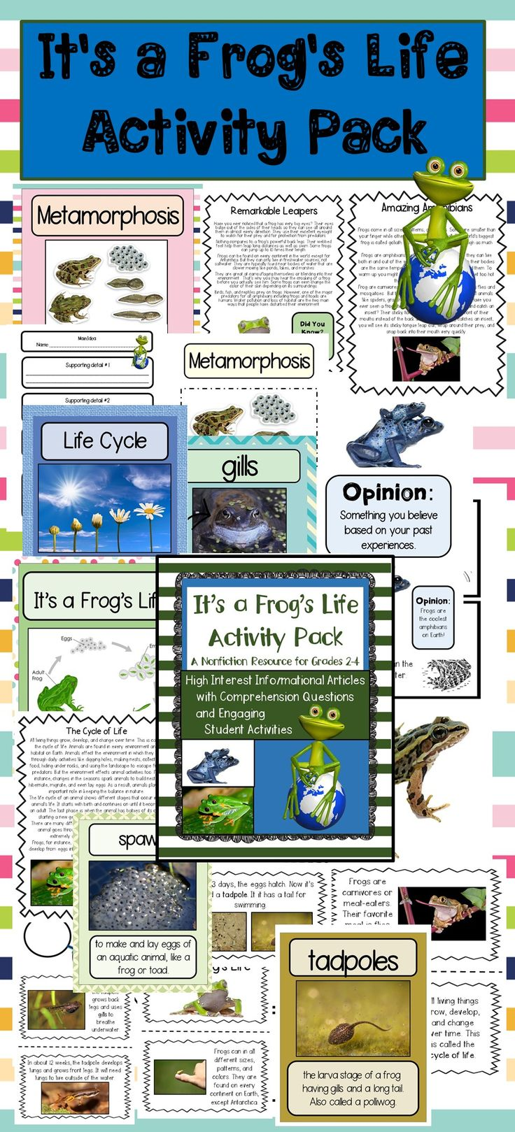 This product includes everything you need to teach all about frogs! There are three informational articles with real life photos and comprehension questions for older students plus a mini-book that describes and explains the cycle of life for students. Just added: A special case study on Poison Dart Frogs There's also a template for younger students to create and color their own mini-book related to a frog's cycle of life.