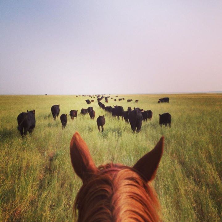 On HorseNation>> How To Be a Professional Cowgirl: Part I Meet Kathleen McConkey, whose life has taken her from the New Jersey suburbs to a working Montana cattle ranch.
