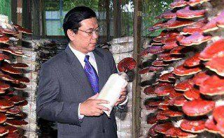 dr Lim at DXN Ganoderma cultivation in Malaysia