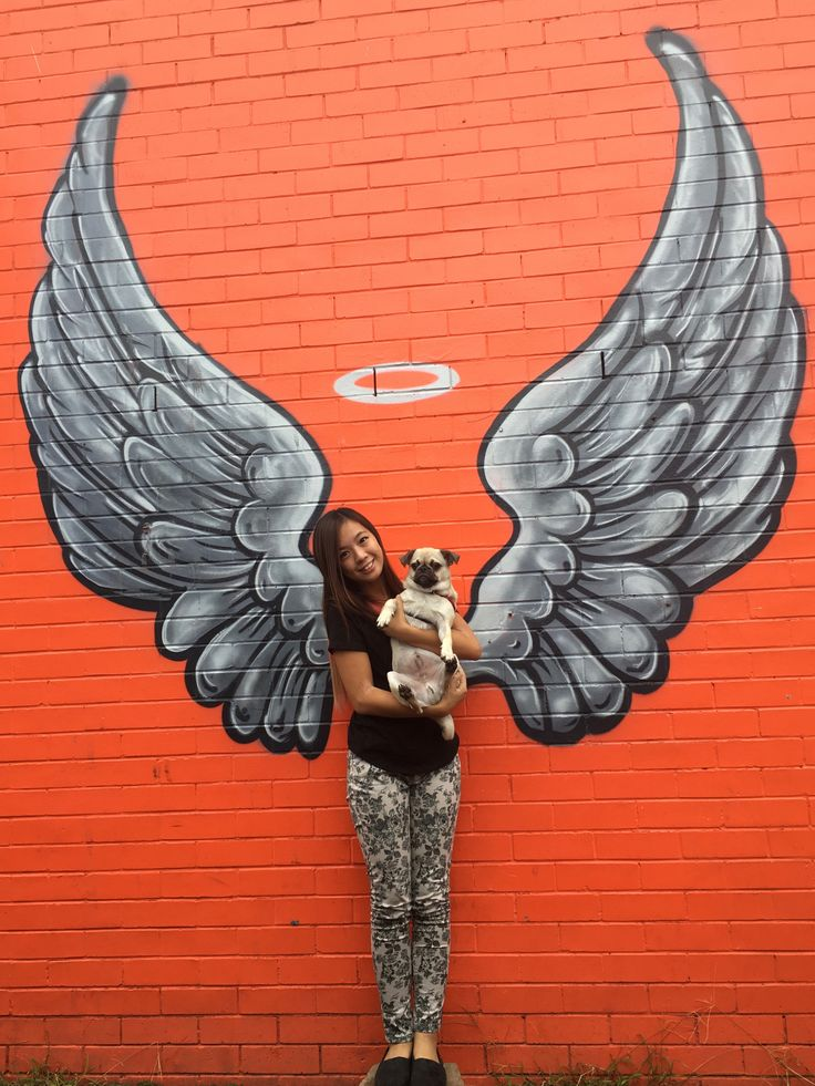 graffiti, street art, brisbane, dog, art, culture, free