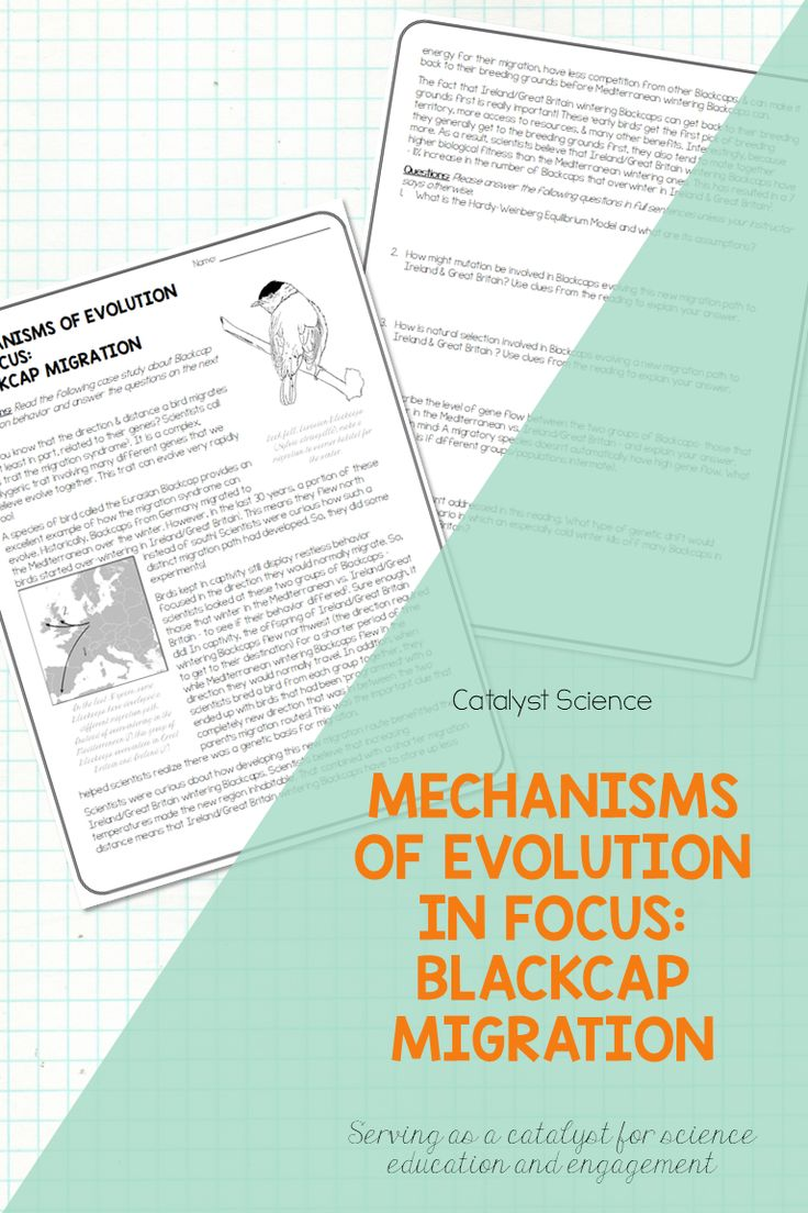 Mechanisms of Evolution in Focus Blackcap Migration