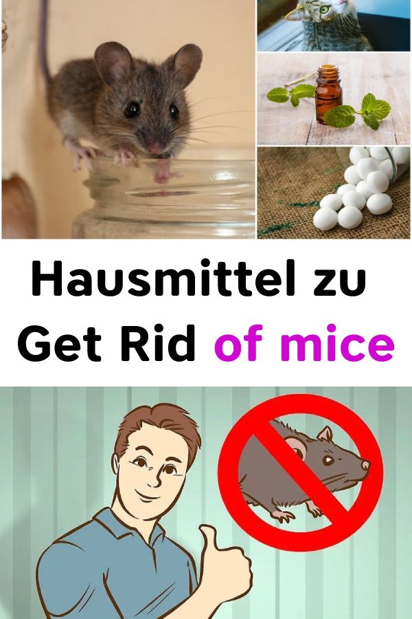 Hausmittel zu Get Rid of mice    #Mice #Gesundheit #Heilmittel #Schönheit #tipp… – Natürliche Schönheit