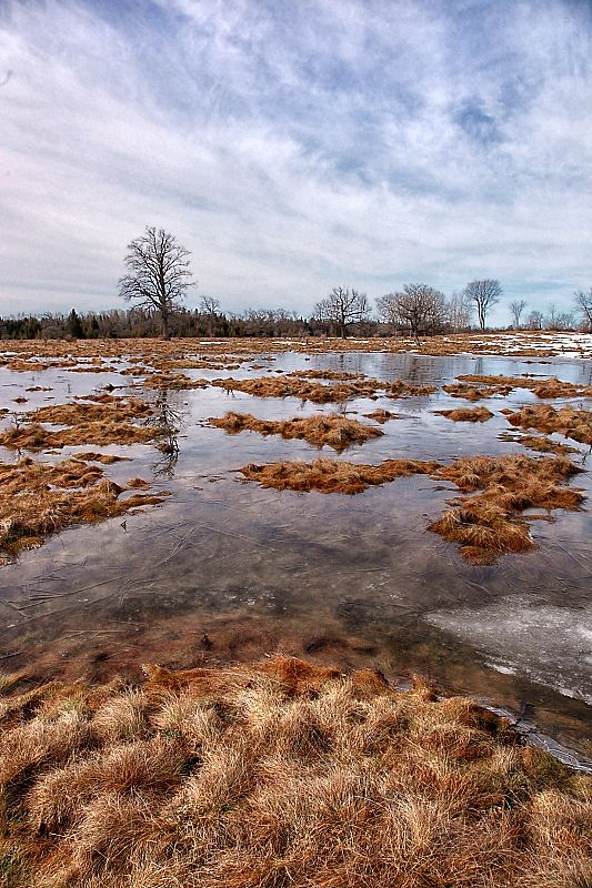 Snow finally melted on the ranch.  Soon this water will be evaporated... City of Kawartha Lakes, Ontario