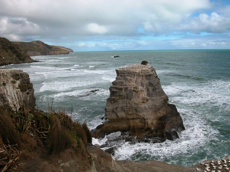 Muriwai Gannet Colony, Aukland, New Zealand