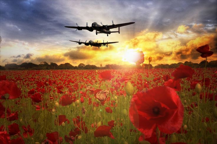 Avro Lancaster Bombers for the Battle of Britain Memorial Flight and Canadian Warplane Heritage Museum over a field of poppies