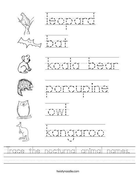 Trace the nocturnal animal names Worksheet - Twisty Noodle ...