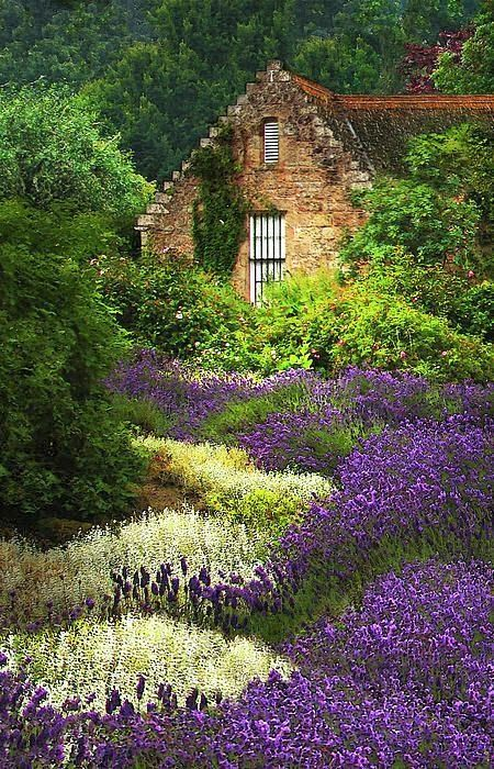 Cottage with Lavender Beautiful