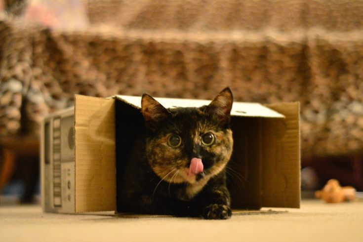 We are moving… check this amazing photo from Katzenworld