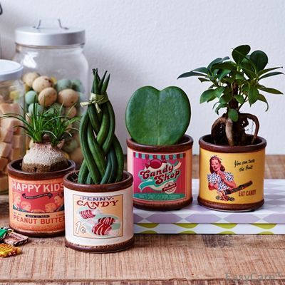Mixed succulent plants in quirky retro candy tins - Best4Garden.co.uk Ltd