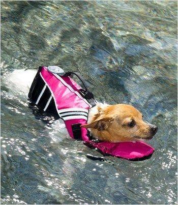 Plovací vesta pro psy SIERRA - žlutá | Záchranné, bezpečnostní vesty |ForDogs.cz