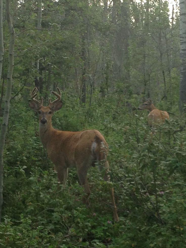 Taken on trail behind dickinsfield , summer 2013