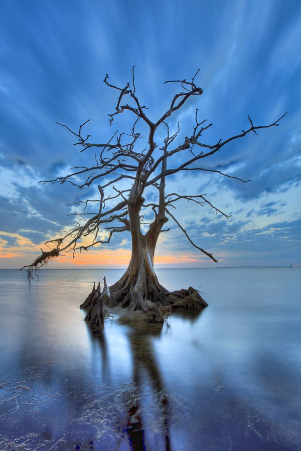 Tree: Water, Lonely Trees, Blue Sky, Nature, Winter Trees, Outer Banks, Weights Loss Secret, Place, North Carolina