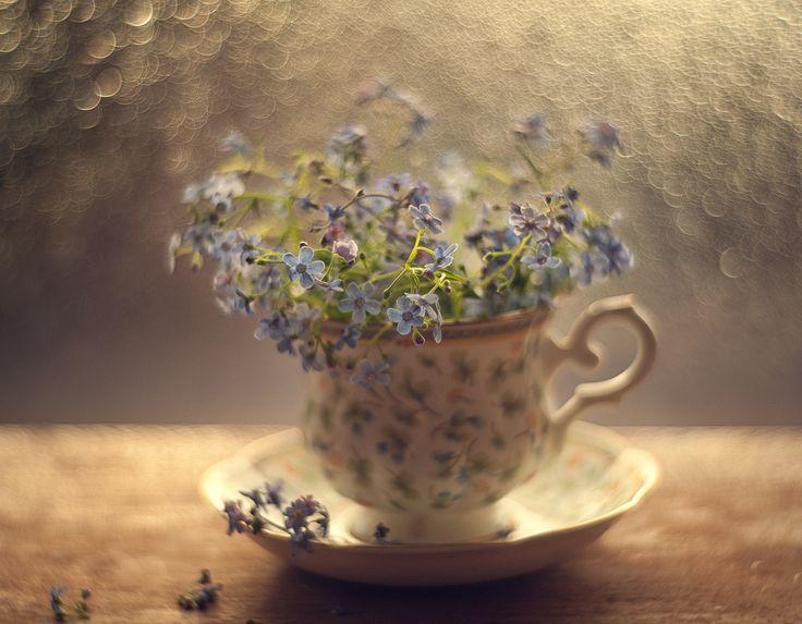 Photo Morning by Valeriya Tikhonova on 500px