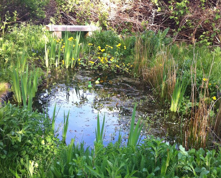 A Waterside Nursery customer wildlife pond. Lots of plants around the pond edges, waterlilies will reach the surface soon
