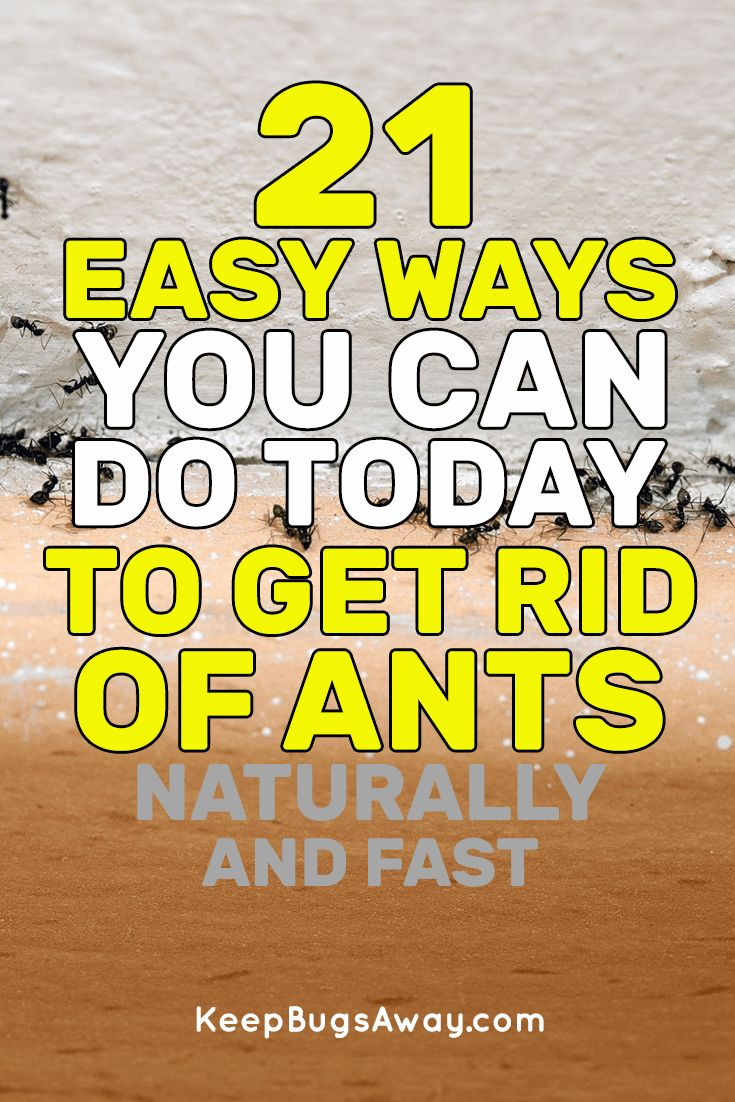 How to get rid of ants naturally and fast top 21 easy