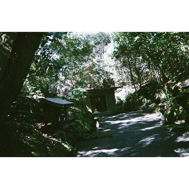 【mizushot96】さんのInstagramをピンしています。 《廃墟感。 ____________ #4 #instagood #35mm #フィルム写真普及委員会 #フィルムに恋してる #フィルム写真撮ってる人と繋がりたい #フィルムカメラ #otto #ottd #鹿児島 #桜島 #kagoshima #sakurajima #神社 #camera #photography #film #filmphotography #filmcamera #写ルンです #写真好きな人と繋がりたい #写真撮ってる人と繋がりたい #風景 #森 東京カメラ部 #カメラ女子 #ファインダー越しの私の世界》