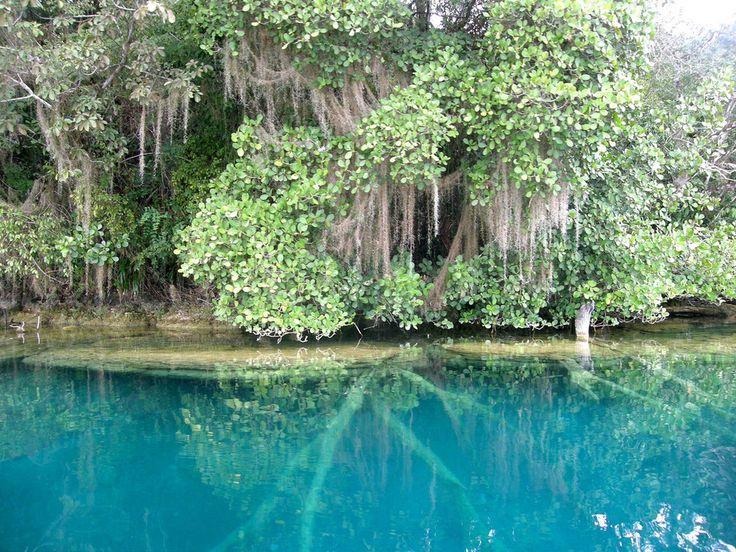 Reserva de la Biosfera de Montes Azules.