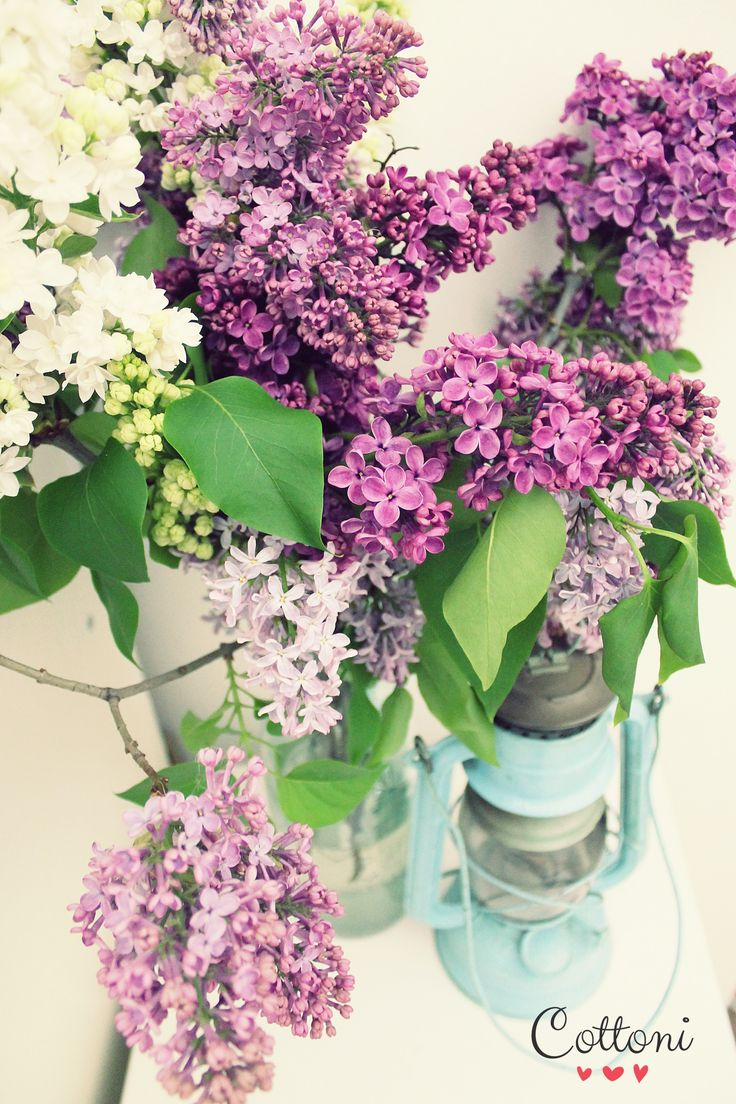 Lilac flowers old lamp