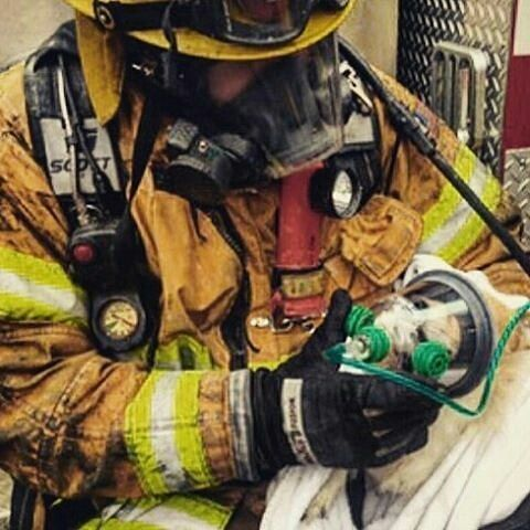 FEATURED POST @ocfirefighters - A dog rescued from a house fire is given oxygen by a OC Firefighter. OCFirefighters go the extra mile everytime especially since pets are part of the family. . . TAG A FRIEND! http://ift.tt/2aftxS9 . Facebook- chiefmiller1 Periscope -chief_miller Tumbr- chief-miller Twitter - chief_miller YouTube- chief miller Use #chiefmiller in your post! . #firetruck #firedepartment #fireman #firefighters #ems #kcco #flashover #firefighting #paramedic #firehouse #straz…
