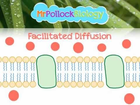 Diffusion, Facilitated Diffusion & Active Transport: Movement across the Cell Membrane - YouTube
