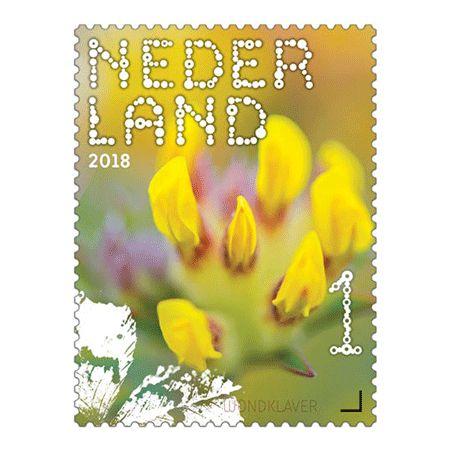 Beleef de natuur - veldbloemen - Wondklaver