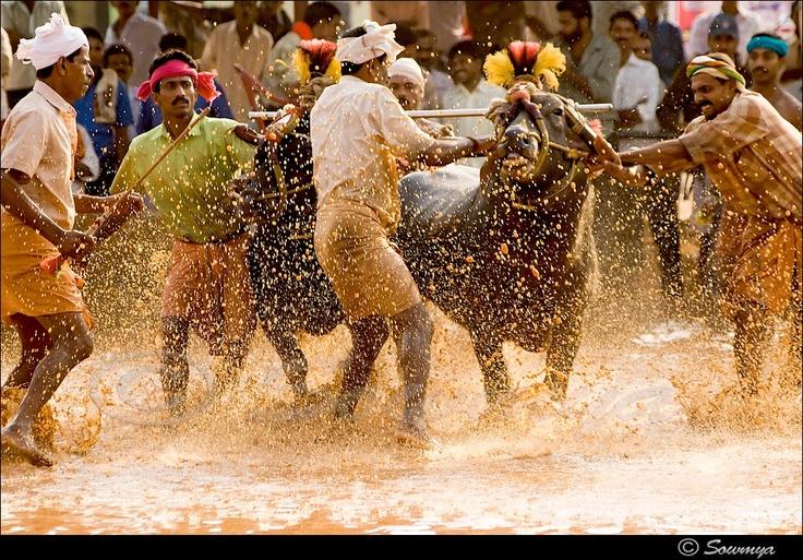 24 Best Sports and Games of Karnataka images | Karnataka ...