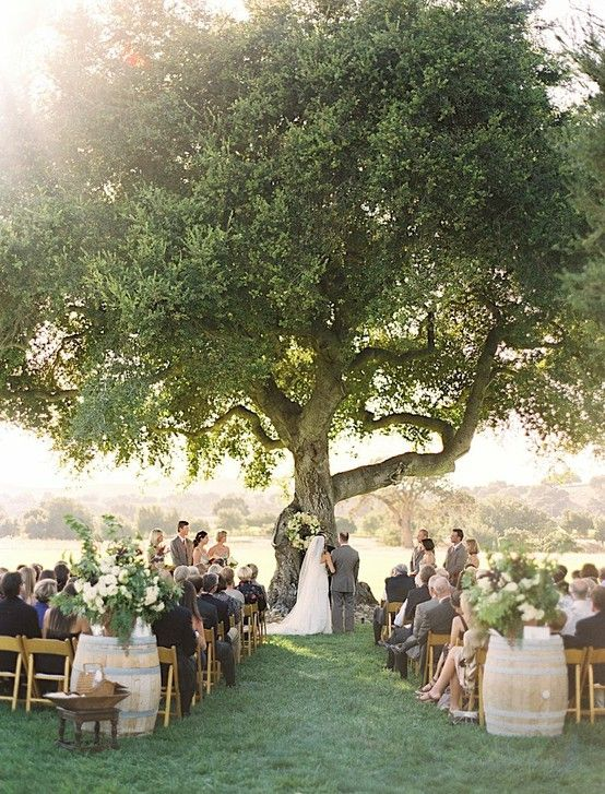 This is the look of the ceremony with the tree and the two wine barrels behind the chairs. I've pinned another example of floral arrangements we're thinking of to go on the wine barrels.