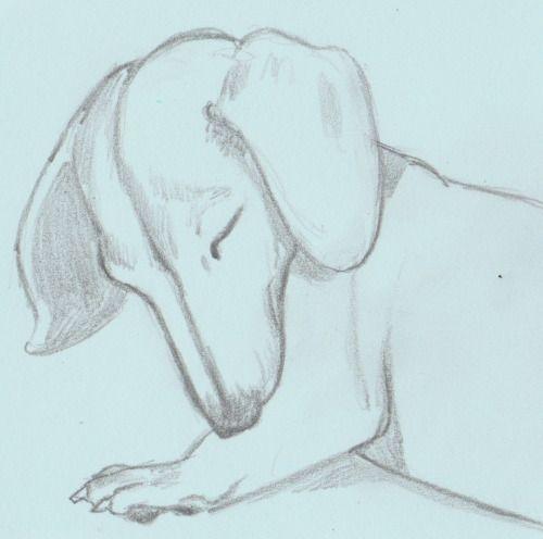Mimu, the miniature Dachshund  quick drawing on post-it  Jenny Jump, 2016