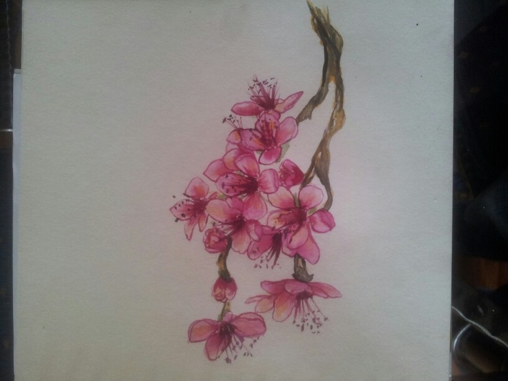 Ink painted cherry blossom by amelia jardine 2013