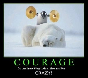 Courage: Funnyquotes, Polar Bears, Brave Things, Funny Pictures, Funny Quotes, Funny Stuff, Penguins, Funny Animal, Funnystuff