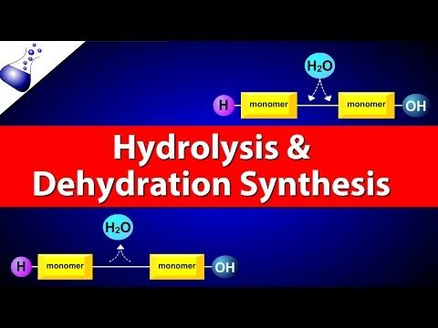 Hydrolysis and Dehydration Synthesis - YouTube