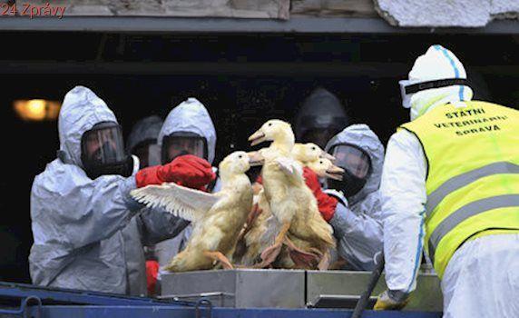 Veterináři v Zárybech u Prahy utratili chov drůbeže: Byl napaden ptačí chřipkou