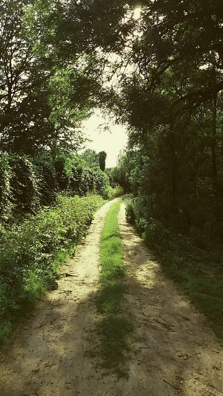 Hello Summer  #road #green #trees  #forest