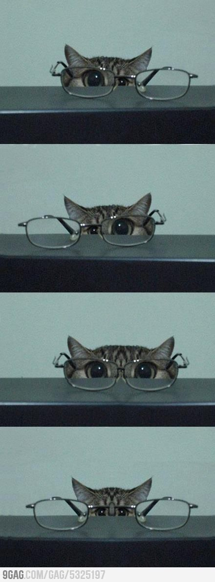 @Callie Gear! Kitten and Glasses