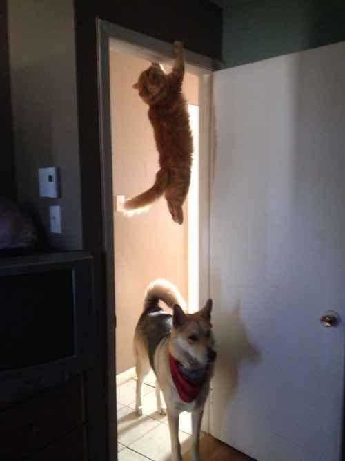 O gato que assistiu muitos episódios de Missão Impossível.   24 gatos que perceberam ter cometido um grande erro