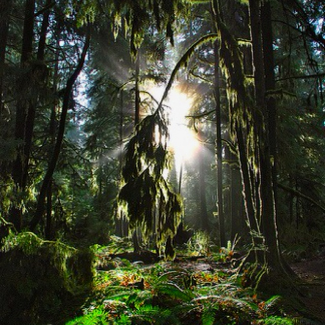 Cathedral Grove.  Outside of Port Alberni, BC on Vancouver Island.  Beautiful place.